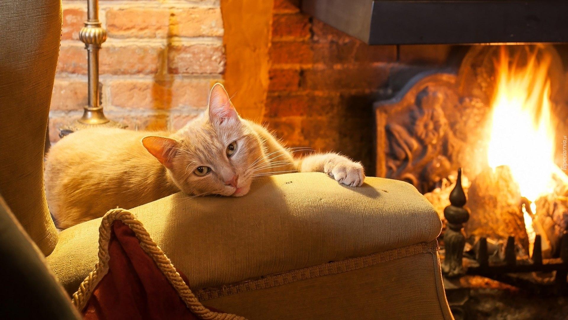 pupile kochają fotele